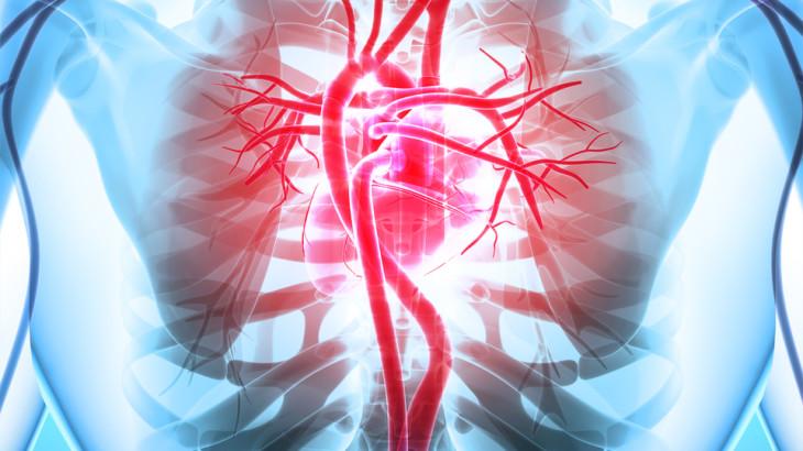 3D illustration of Heart - Part of Human Organic.