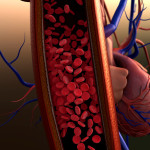 blood vessels, artery shown with a cut out section, Contraction of blood vessels on a heart background