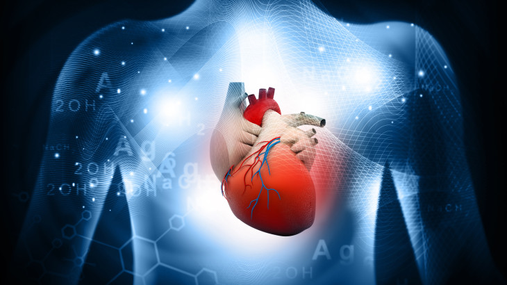 3d human heart  medical anatomy